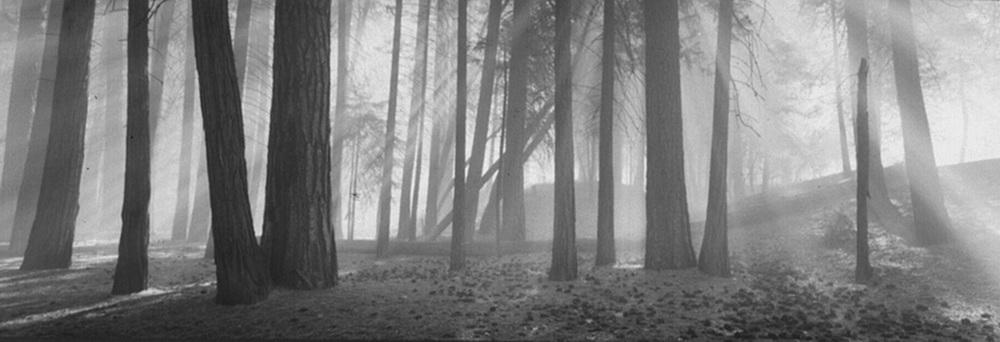 YR 13--Gibson, David H (Forest).jpg