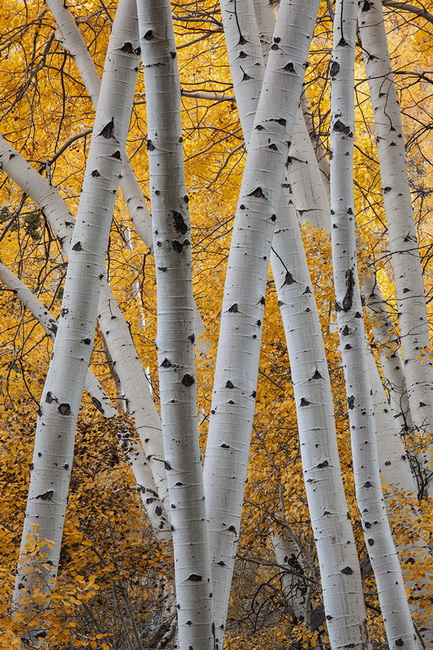 David Hoffman, Aspen Trunks, YR29