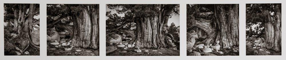 Ancient One, Julie Hulden