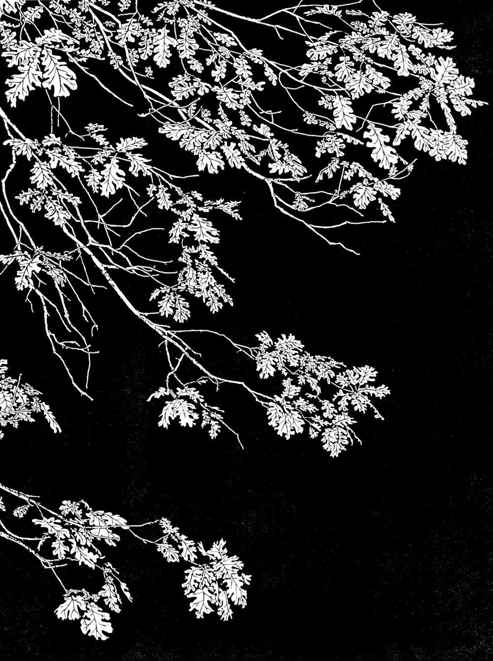 Black Oak, Yosemite, Monique Wales