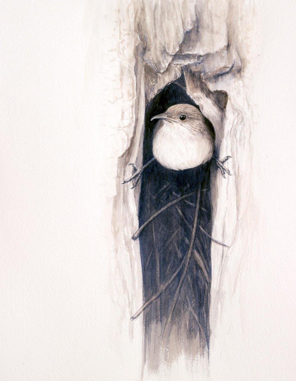 Building A Nest - House Wren, Kathy Kleinsteiber