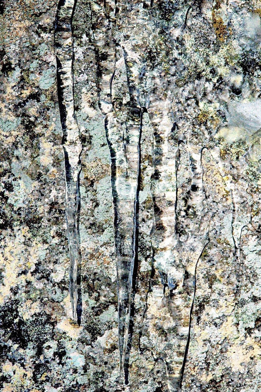 8689-ice_trails_over_lichen_near_mirror_lake-1113201612-39874.jpg