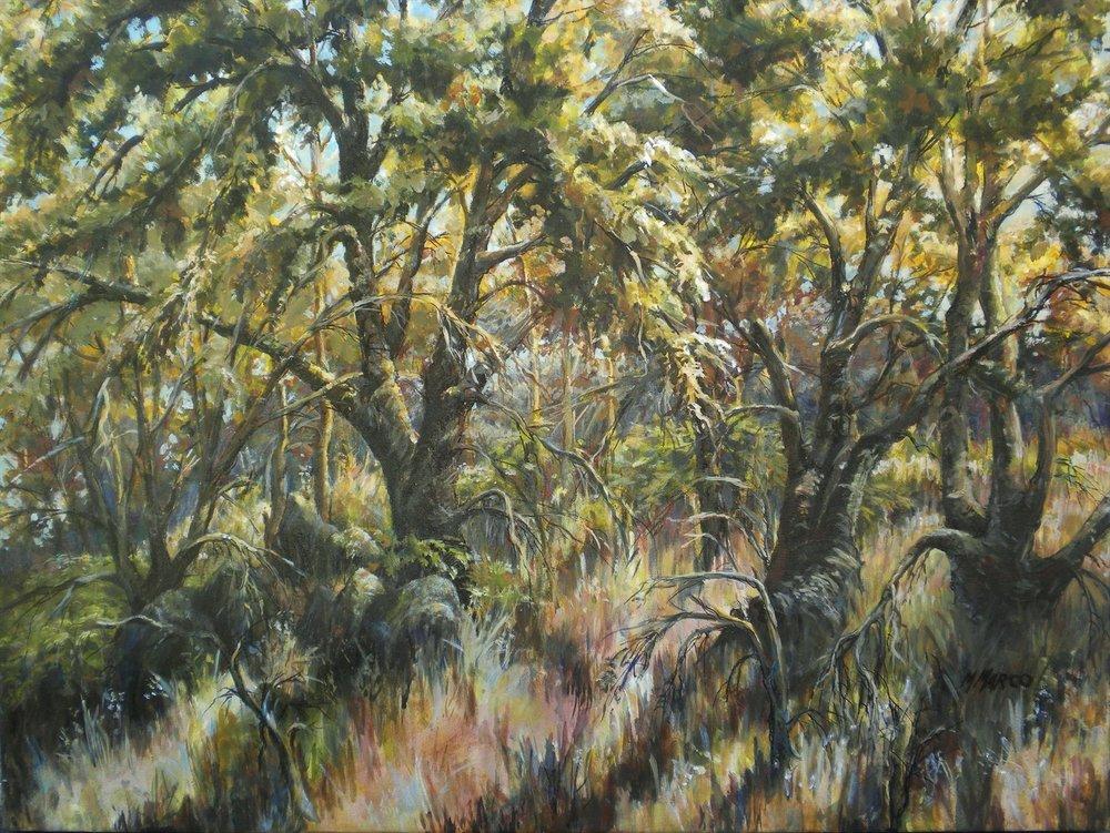 8689-sierra_woodlands-1120201617-40114.jpg