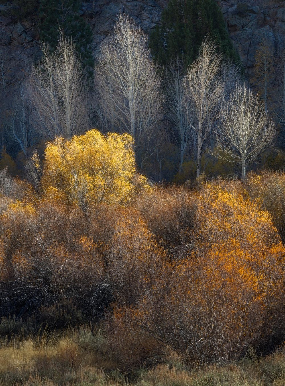 Autumn Aglow, Charlotte Gibb