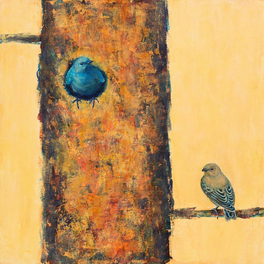 House Hunting, Mountain Bluebirds, Kathy Kleinsteiber