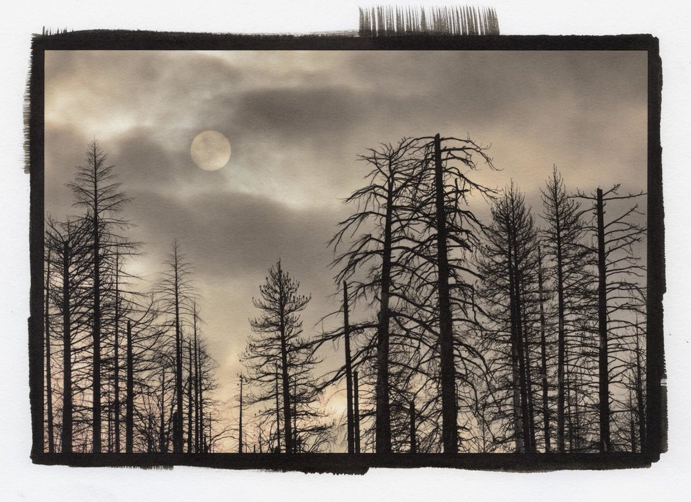 Sun, Clouds and Burnt Trees, Yosemite, Kerik Kouklis