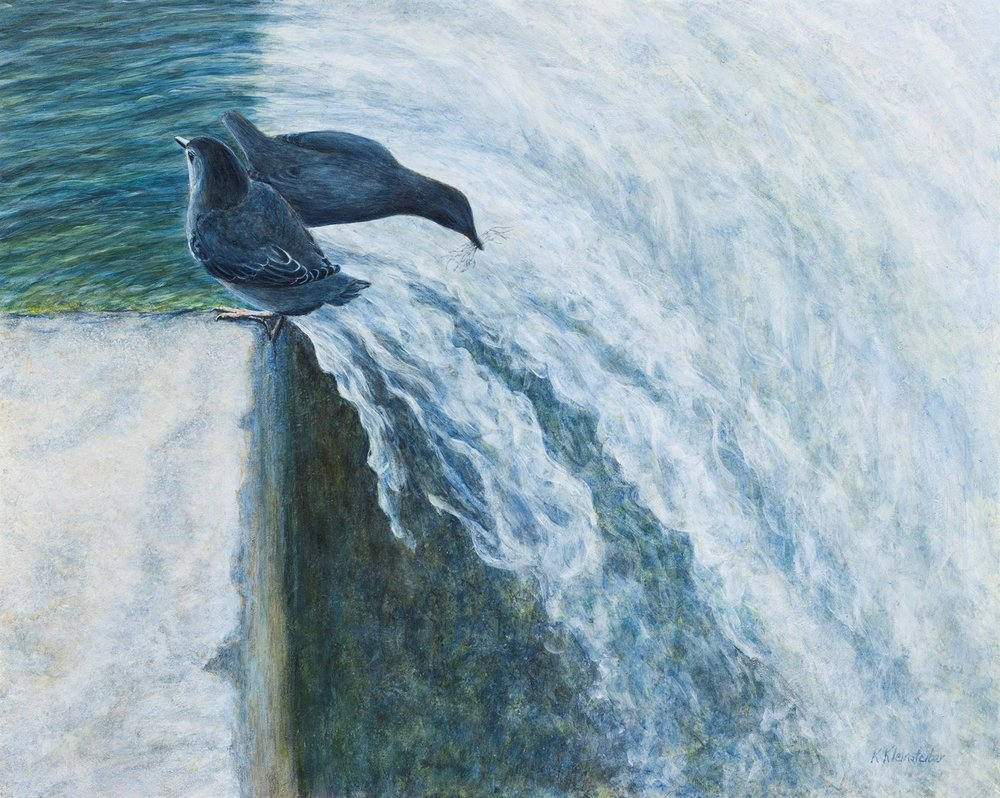 Home Sweet Waterfall, American Dippers, Kathy Kleinsteiber
