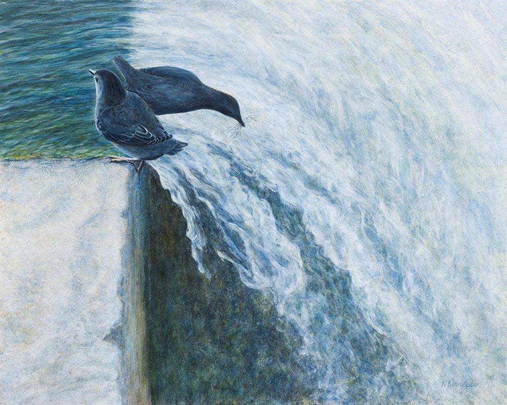Home Sweet Waterfall, American Dippers, Kathy Kleinsteiber