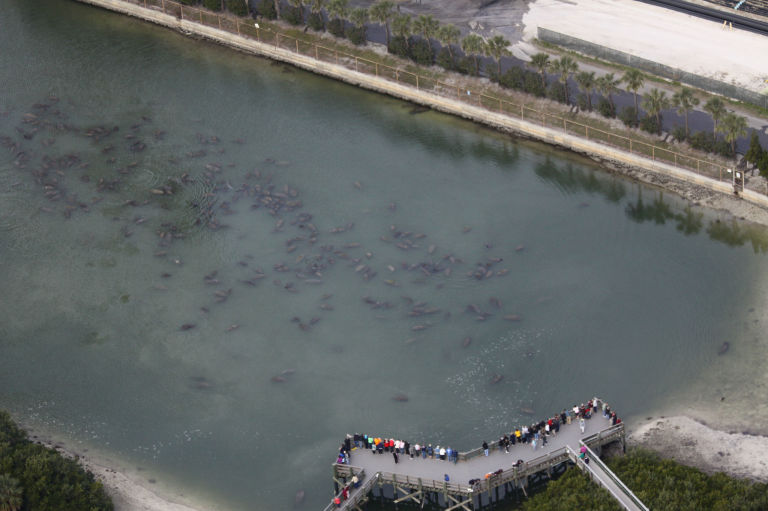 Florida Manatees at Apollo Beach and Tampa Electric, from 2014 aerial survey. FWC Fish and Wildlife Research Institute