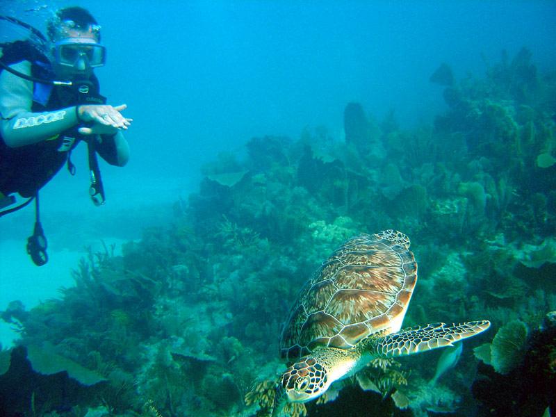 Credit: mattk1979 | John Pennekamp Coral Reef State Park, Key Largo