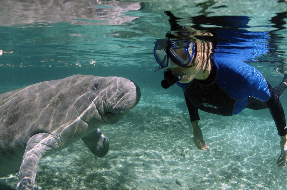 swim with manatee crystal river