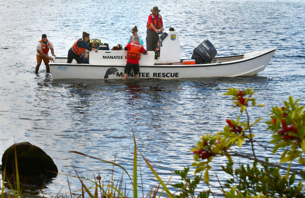 A U.S. Fish and Wildlife vessel backs into position to unload a manatee that was captured minutes before. (Matthew Beck)