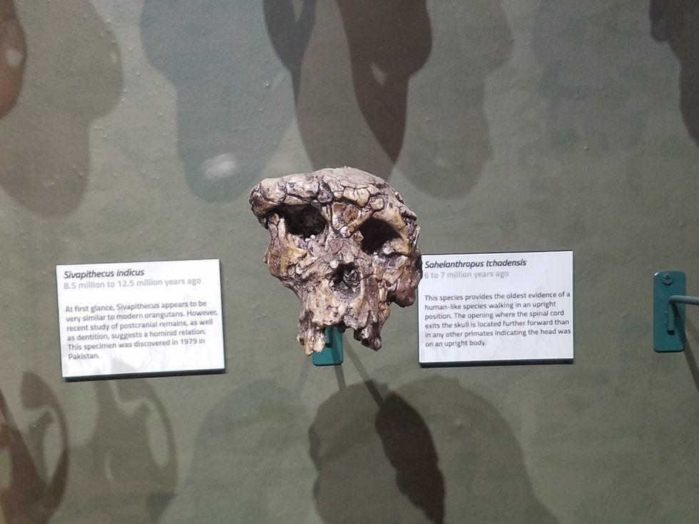 Skeletons_Museum5.jpg
