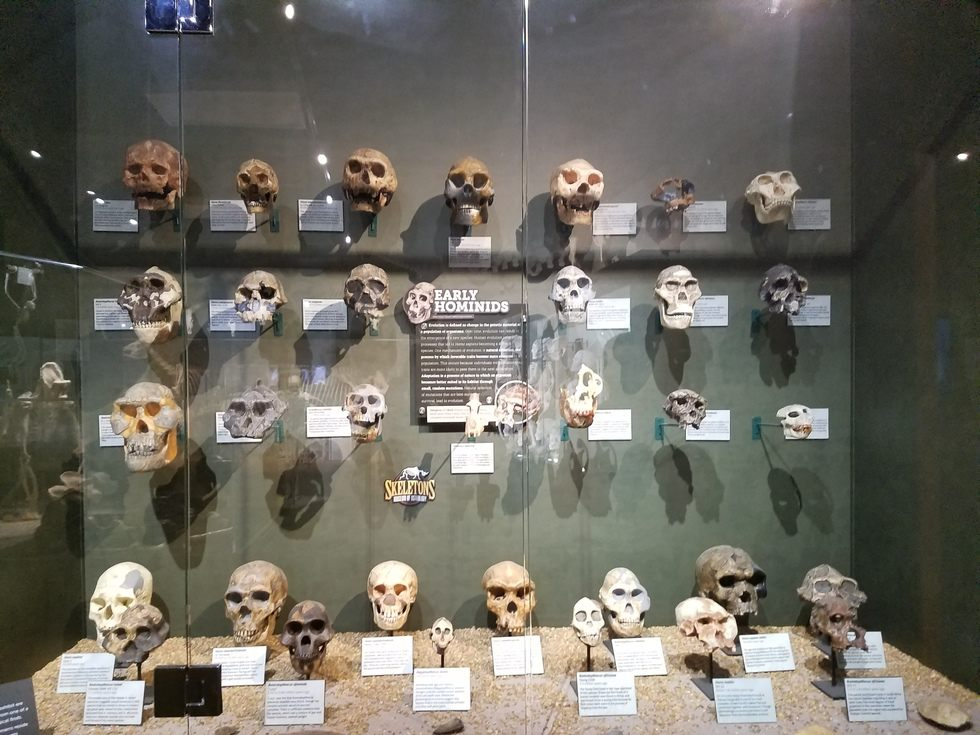 Skeletons_Museum4.jpg
