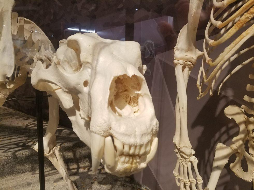 Skeletons_Museum9.jpg
