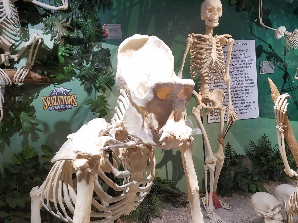 Skeletons_Museum6.jpg