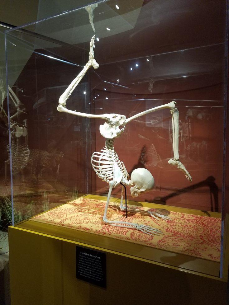 Skeletons_Museum3.jpg