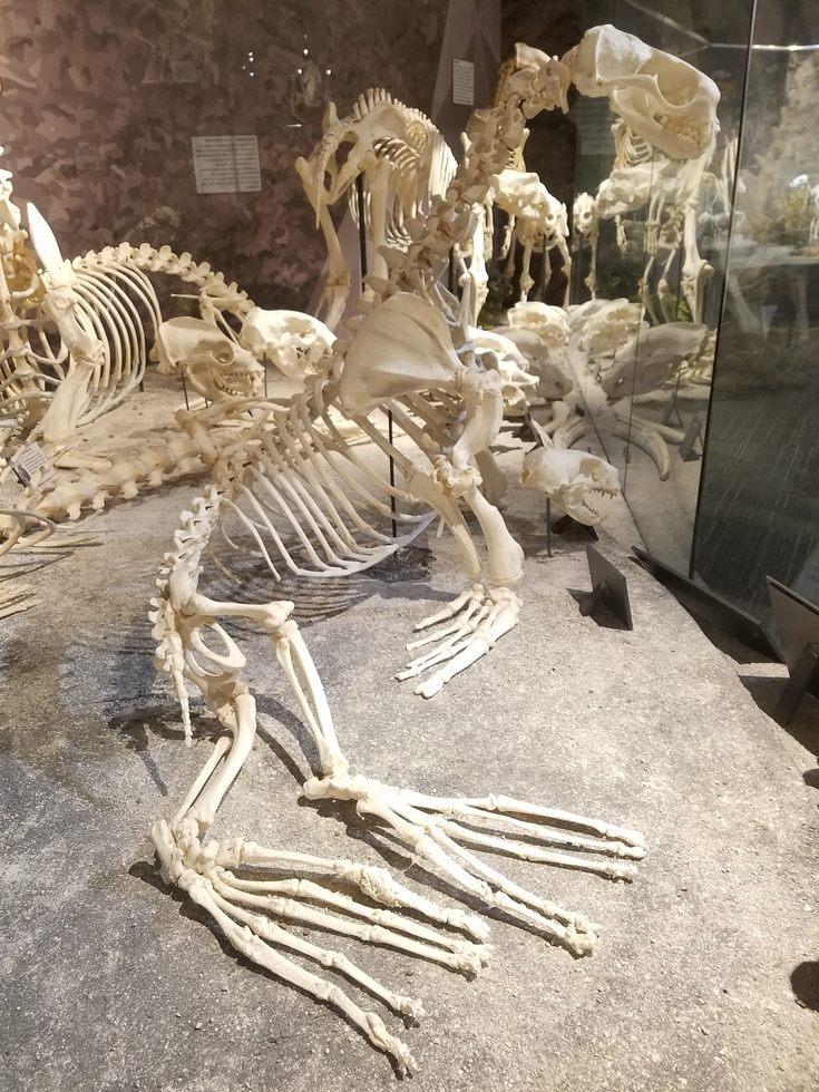 Skeletons_Museum10.jpg