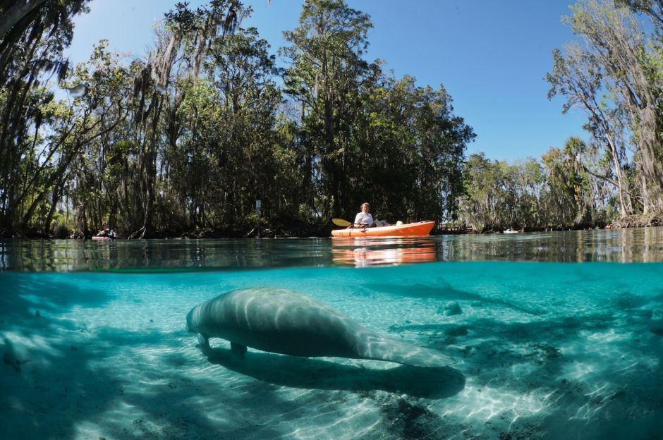 Photo: Discover Crystal River Florida