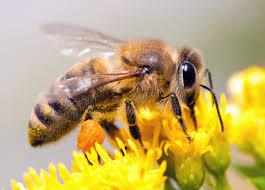 bee close up.jpg
