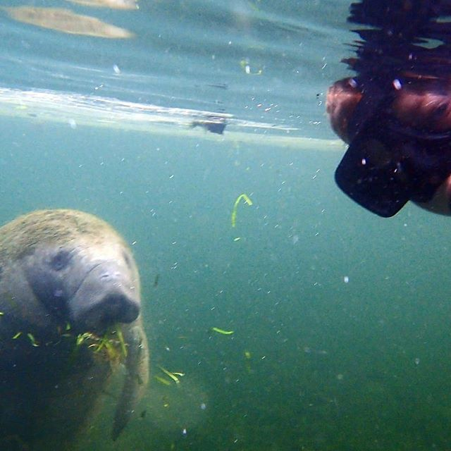 A little face to face action with our manatee friends!! Come visit us soon to see Florida's Wild Side! riverventures.com