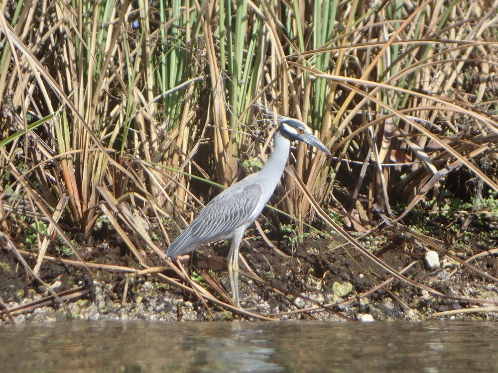 audubon birding tour