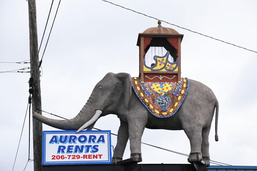 The crazy Aurora elephant