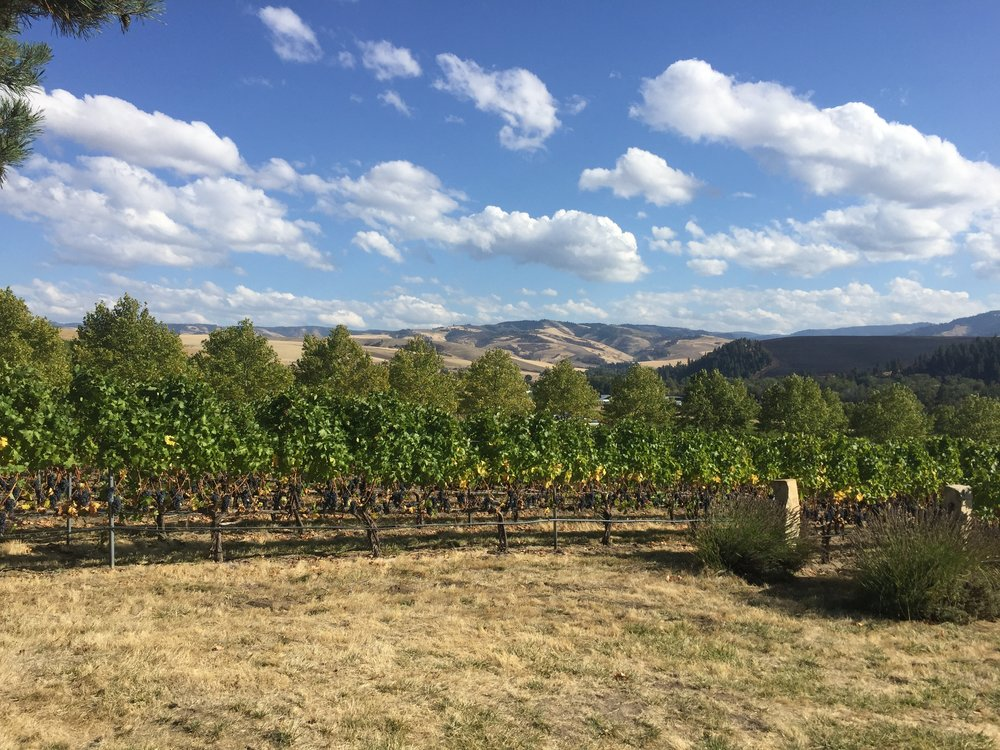 Acres of fruit-laden vines at Figgins Family Wine Estates, just outside Walla Walla.