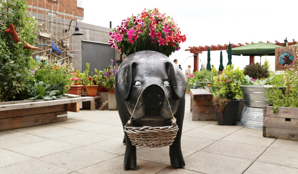A chalkboard pig for decorating at Pike Place Market's Urban Garden