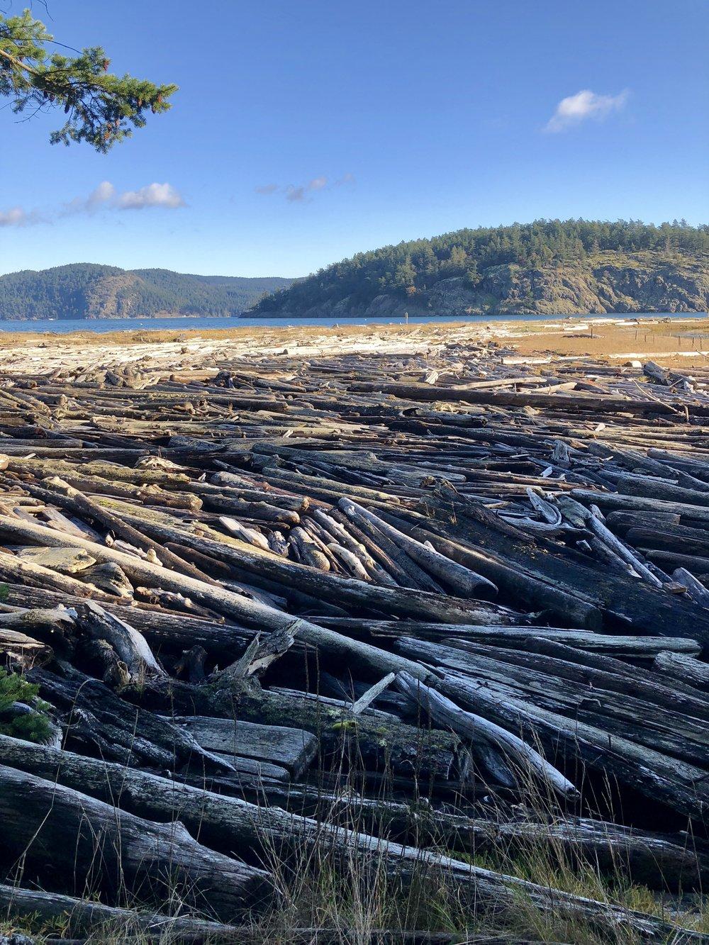 Driftwood at Spencer Spit