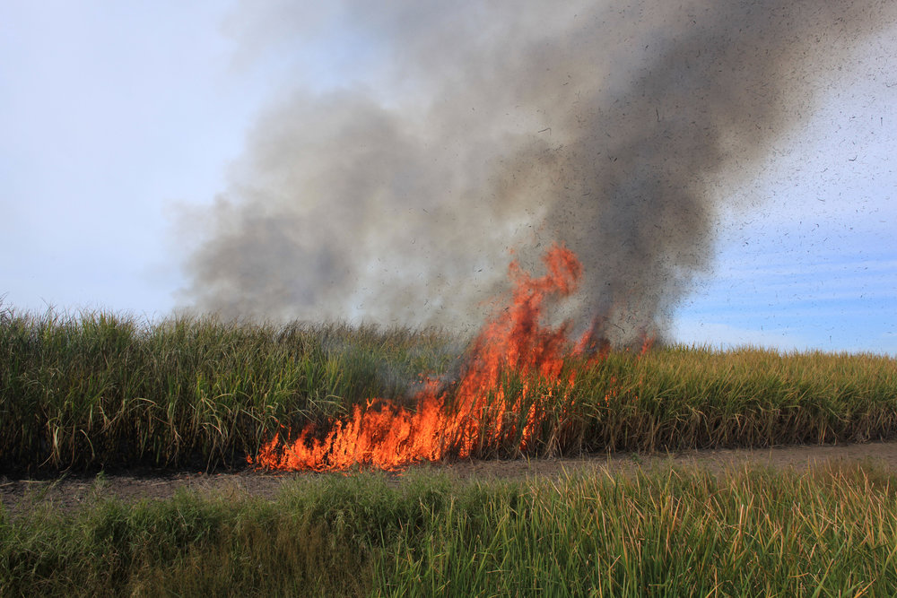 """Sugarcane Burn""  Photograph   2017"