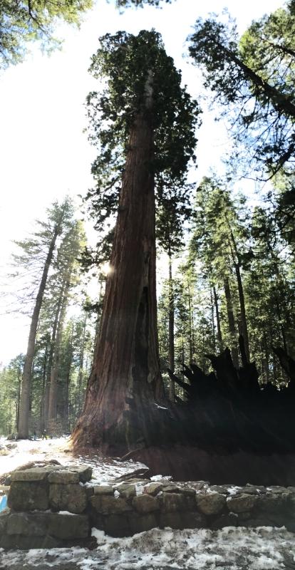Sequoia Panoramic