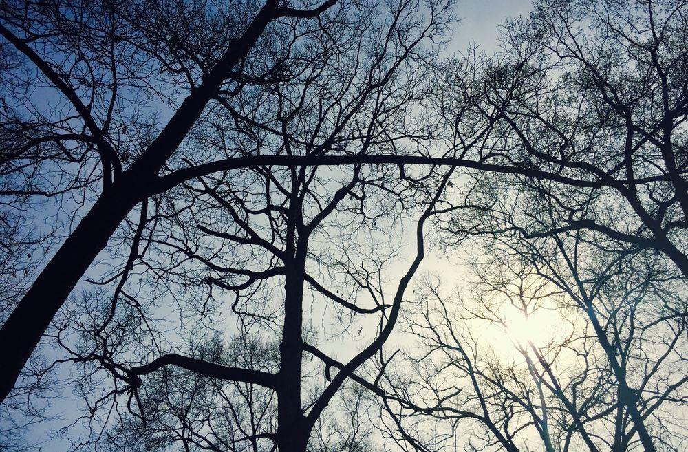 spring-trees.jpg