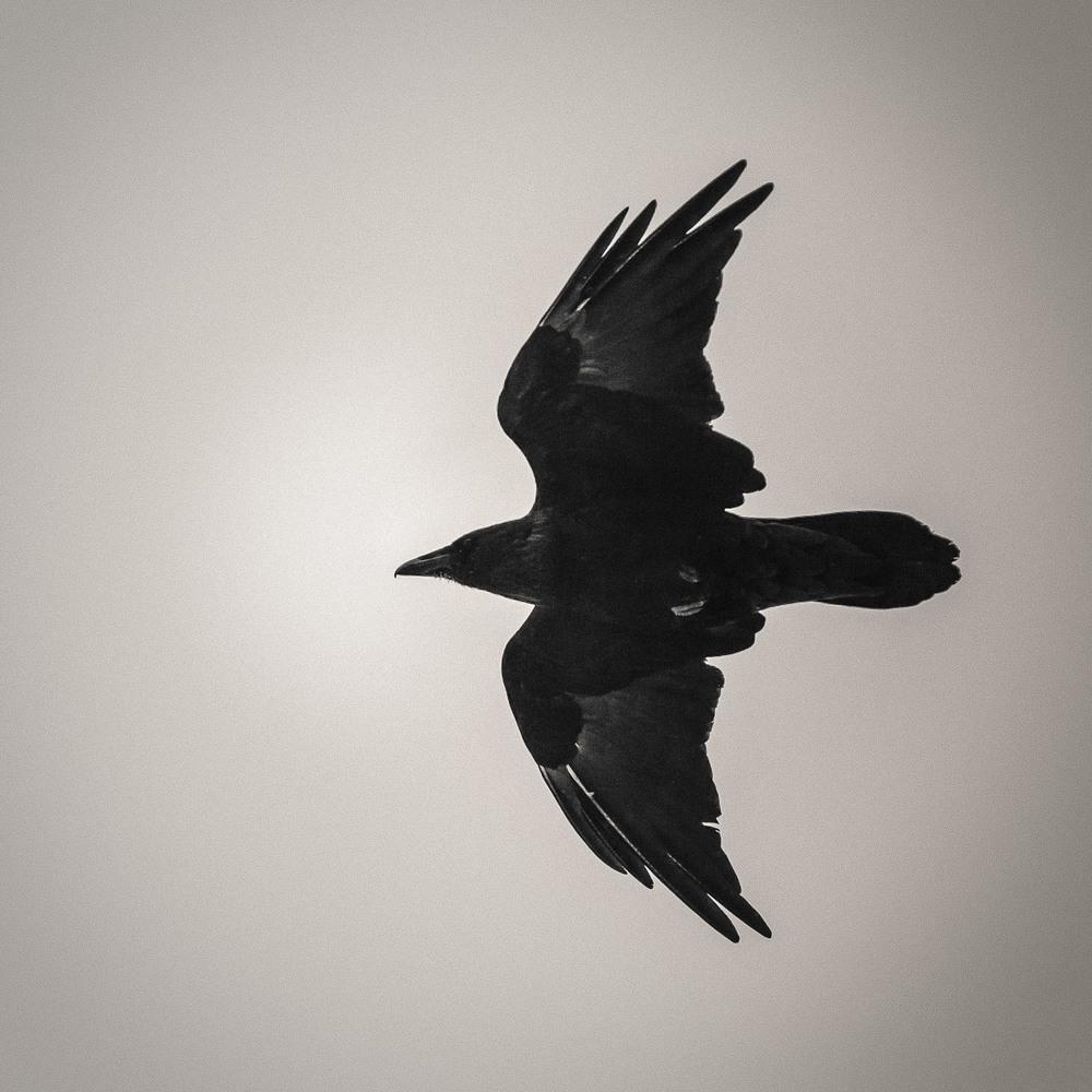 The Overseer [2012] Kootenay NP, BC, Canada