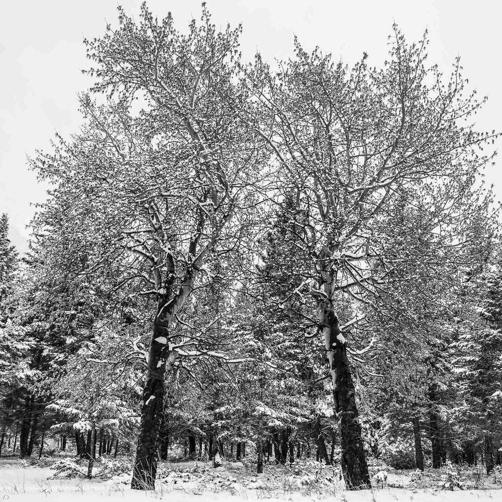 Albedo [2013] Banff NP, AB, Canada