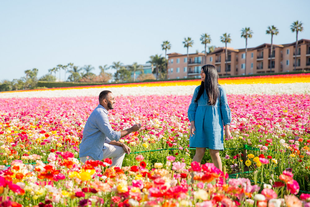 Ahsan_Sarah_Proposal_Carlsbad_Flower_Fields_016.jpg