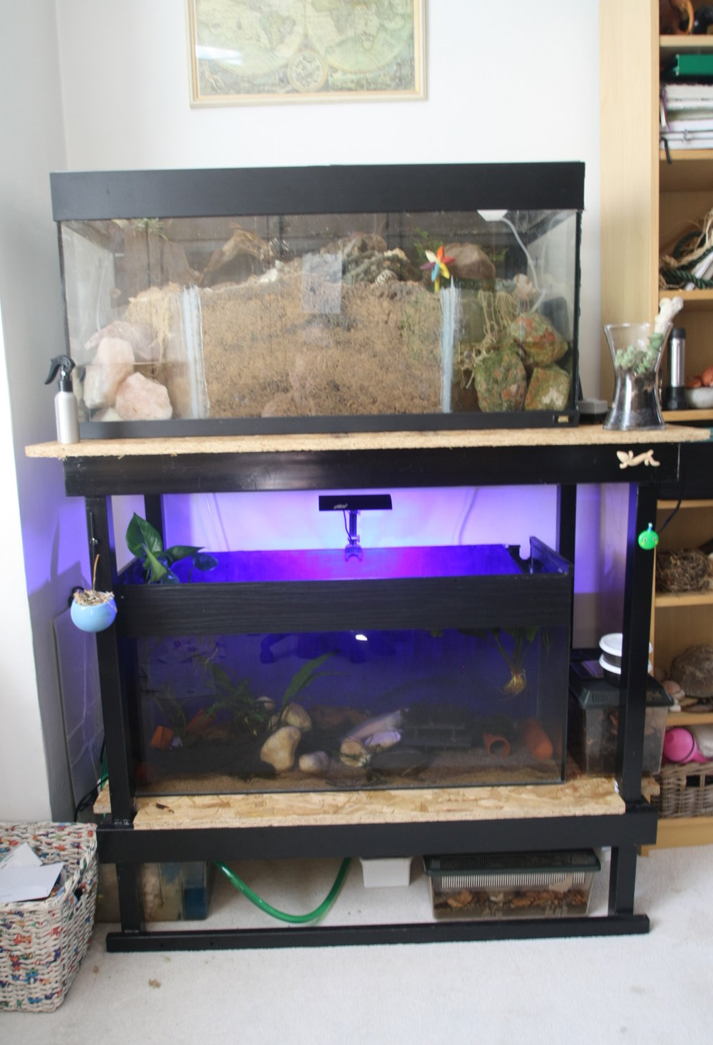 Aquarium Shelves