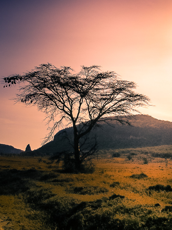 The lonely but beautiful Kenyan bush at sunset.