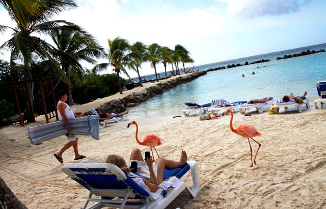 Flamingo Beach, Renaissance Island, Aruba.