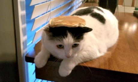 catpancake-pic1.jpg