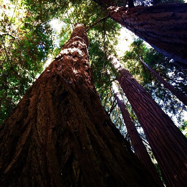 "Check out my latest blog post ""Why Mind Training"" at Medium. #ShiftIt #mindfulness  #heartfulness #consciousness #meditation #1440multiversity #redwoods #mindtraining #wisdom #leadership #mindful  #introspection"