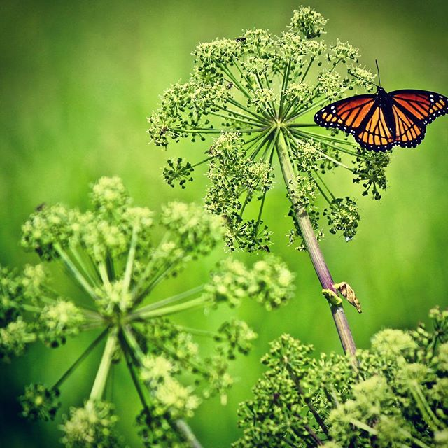 #change is constant.  My medium blog this week speaks to the changes I am observing in the mind-training field.  #shiftit #mindfulness #mindtraining #consciousness  #startups #investor #investing  #mondaymotivation #monday #butterfly #minnesota