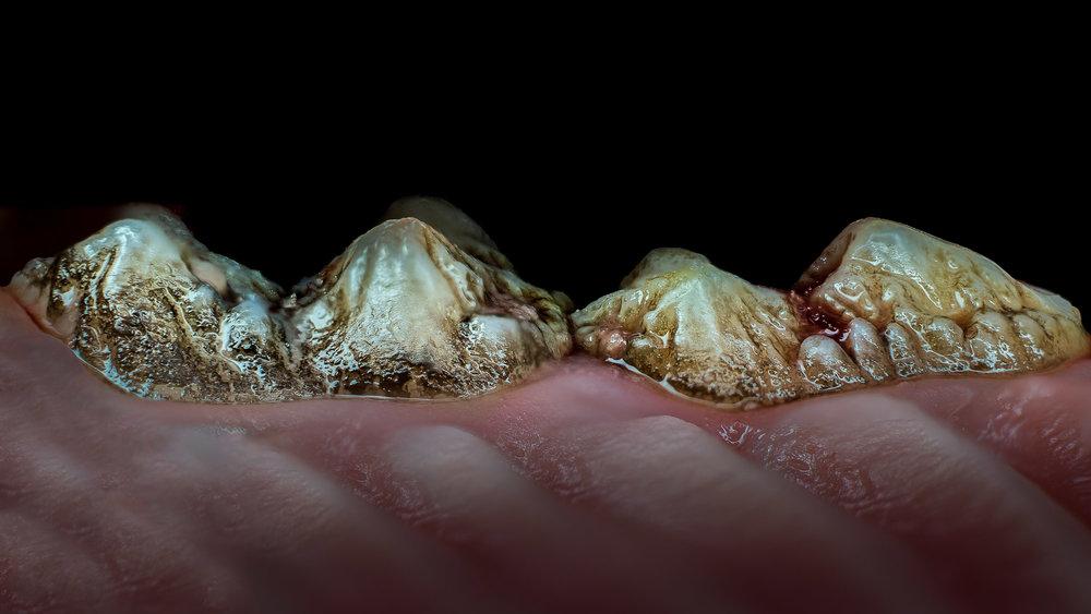 pig-teeth-2.jpg