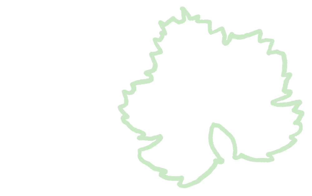 Bay Grape.png