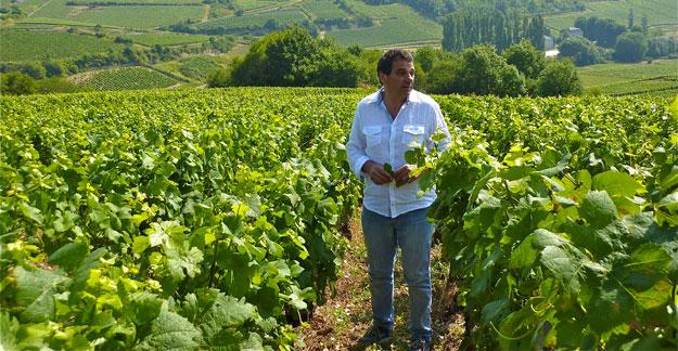 bernard-zito-vigneron-bourgogne.jpg
