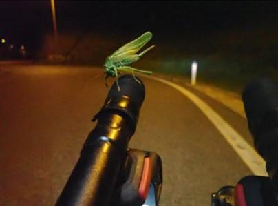 Jiminy cricket! Mikko Makipaa (#4)
