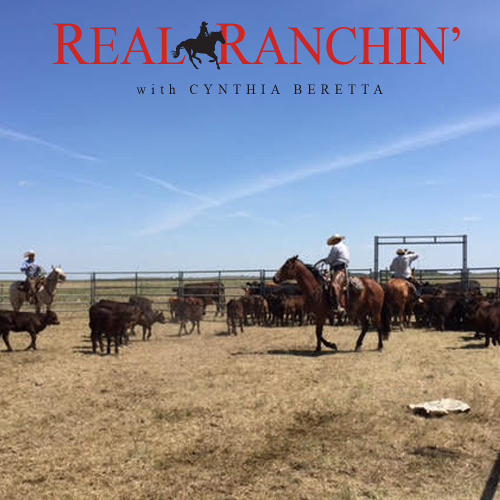 Real-Ranchin-Herding.jpg