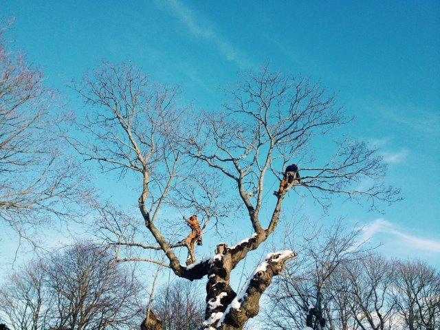treeworksky.jpg