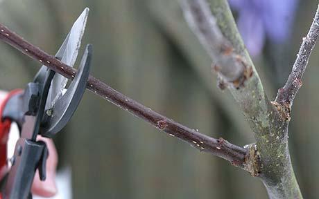 tree-pruning_1526669c.jpg