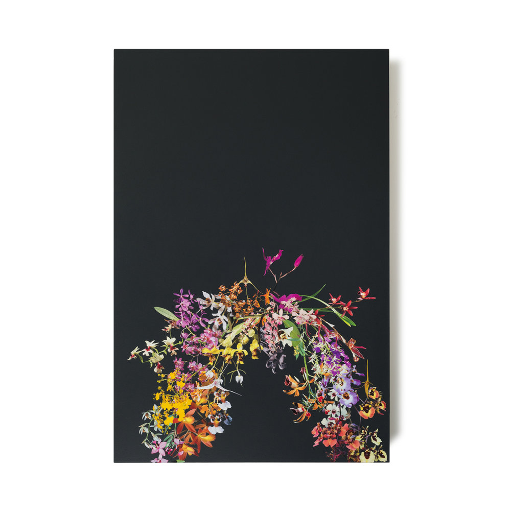 StephenEichhorn_orchid-arc-1.jpg